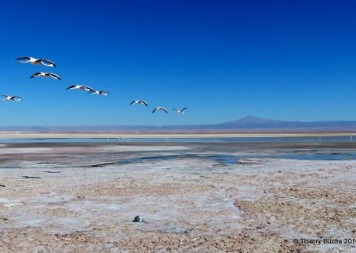 CHILE, Salar de Atacama, 2013
