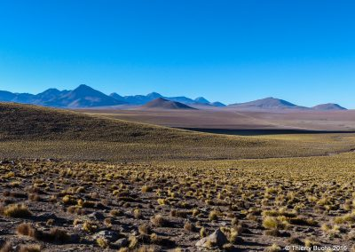 CHILE, Altiplano, 2013