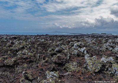 ECUADOR, Galápagos, Isla Isabela, 2014