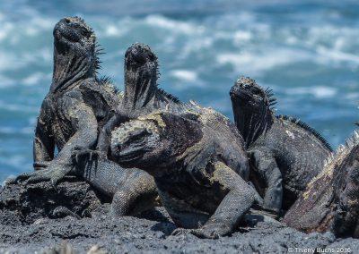 ECUADOR, Galápagos, Isla Fernandina, 2014