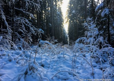 Winter forest Fribourg